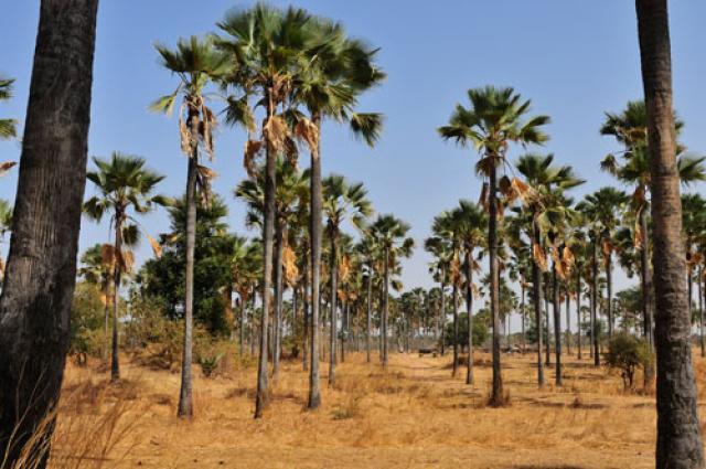 Circuits Nature au Sénégal
